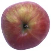Schöner aus Herrenhut, Apfelbaum Hochstamm, Apfel oben