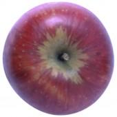 Rubinola, Apfel Halbstamm, oben