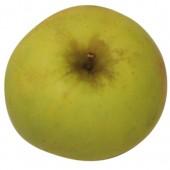 Zuccalmaglio Renette, Apfel oben